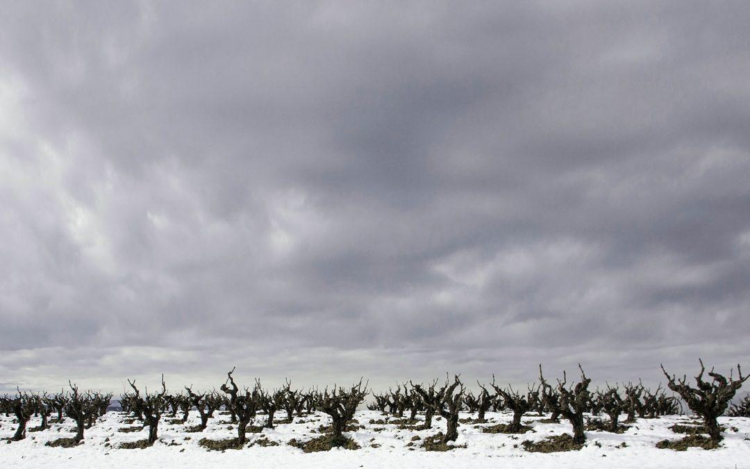Viñas de Sant Sadurní Montesquius