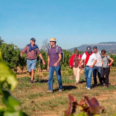 senderismo entre viñas montesquius