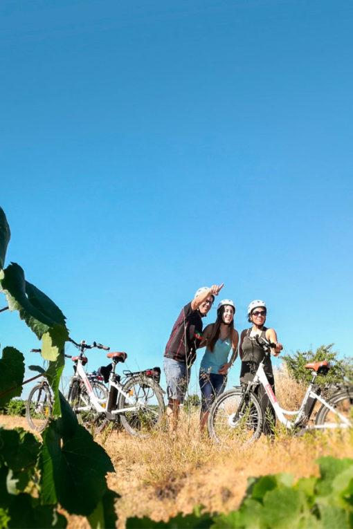 bicicleta entre viñedos montesquius